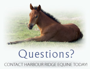 EquineReproductionQuestions1